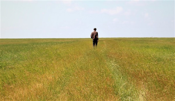 relationships, loneliness, field